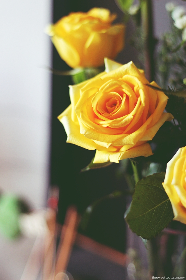 yellow rose 2